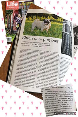 NZ Pug Rescue in Life and Leisure Magazine
